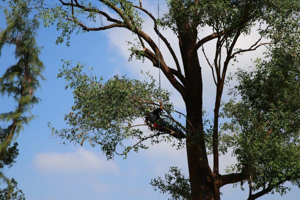 G38高空修樹